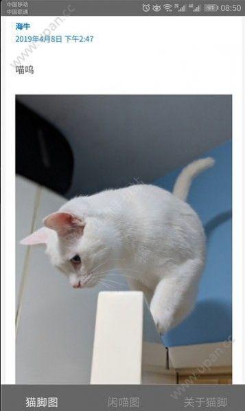 猫咪社区截图