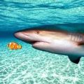 真正的鲨鱼模拟器