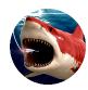 深海鲨鱼大对决